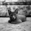 Cuidados a ter com os gatos: Primovacinação