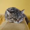 Cuidados a ter com os gatos: Desparasitações Interna e Externa
